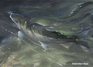 Mark Boyle's Steelhead Painting